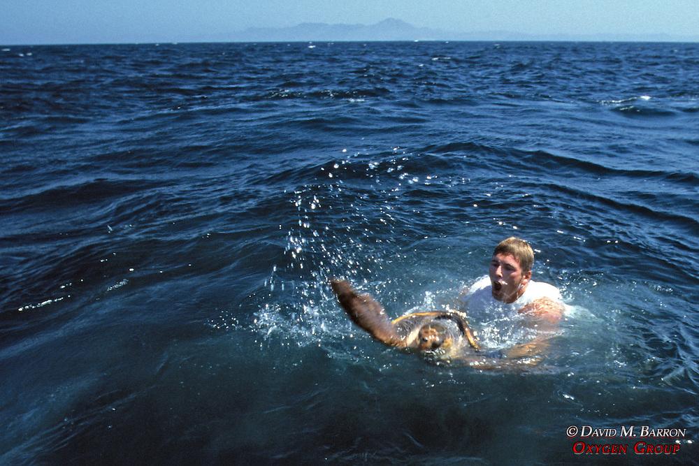J. Nichols Rodeo Turtle Capture