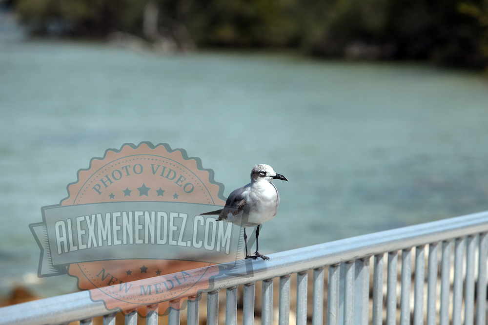 A bird on a bridge in St. Petersburg, Florida. (AP Photo/Alex Menendez) Florida scenic highway photos from the State of Florida. Florida scenic images of the Sunshine State.