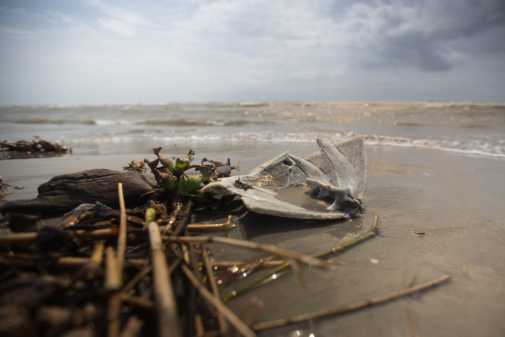 April 9, 2015, Almost five years after the BP oil spill,  A piece of a sea turtle shell on Grande Terre, a barrier island in Plaquemines Parish that was hit hard by the BP oil spill in 2010.BP recently led an effort to clean up a tar mat uncovered on the same area of the beach a couple weeks before that was connected to the BP oil spill.