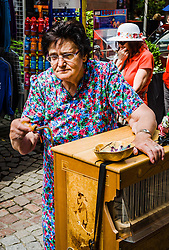 Old lady with a 'Hurdy Gurdy' in a street in Strasbourg, France.<br /> <br /> (c) Andrew Wilson   Edinburgh Elite media