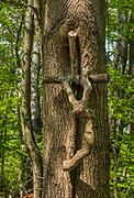 Święty Krzyż, 02-05-2019. Drewniany krzyż na drzewie przy turystycznym szlaku na Święty Krzyż .