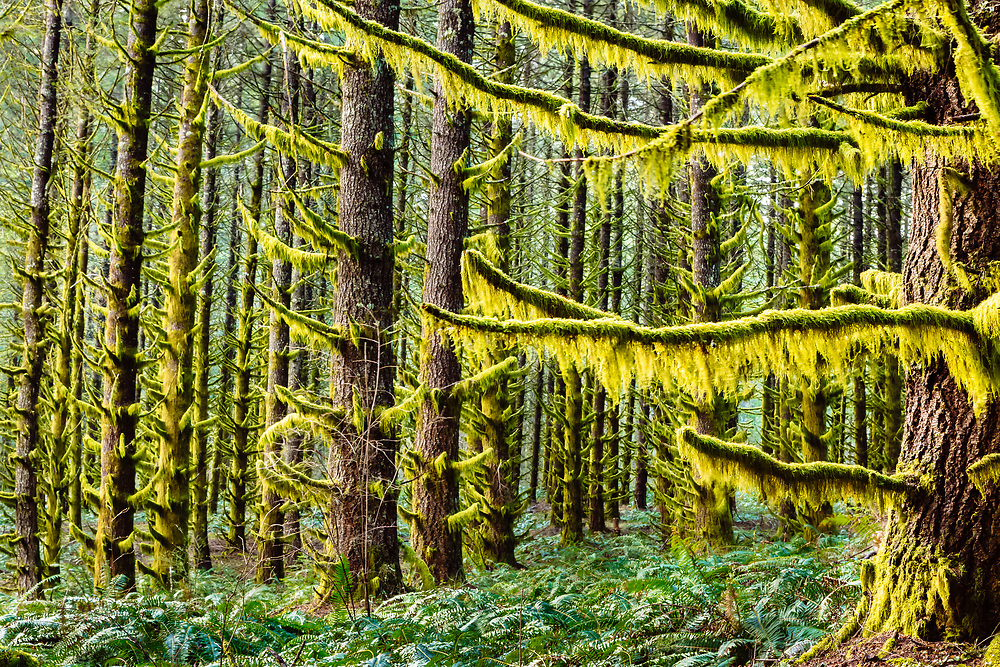 A forest comes alive on a spring morning just on the edge of the Willamette Valley in Oregon.