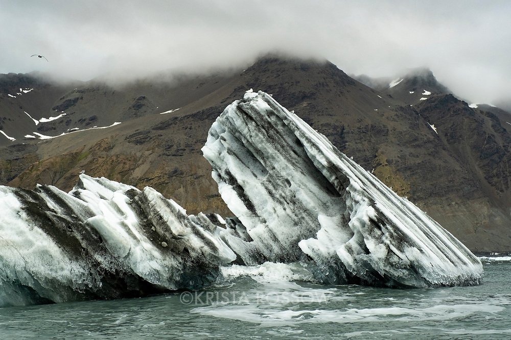 Antarctic terns line the top of a striated glacial iceberg from the Nordenskjold Glacier in Cumberland East Bay on the north coast of South Georgia Island.