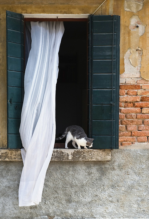 VENICE, ITALY - AUGUST 27:  A cat looks down from a windowsill on August 27, 2011 in Venice, Italy. Dingo is the Anglo-Venetian association part of the AISPA,  founded in 1965 by Helen Saunders and Elena Scapabolla and is devoted to the welfare of venetian stray cats. Cats in Venice
