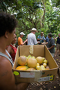 Vaipaee Community Botanical Garden, Ua Huka, Marquesas Islands, French Polynesia, (Editorial use only)<br />