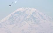 On the 70th anniversary of D-Day three P-51 Mustangs fly in formation past Mount Rainier over Seattle. The lead plane, center, flown by John Sessions, is a restored P-51B which flew in the invasion. (Ken Lambert / The Seattle Times)