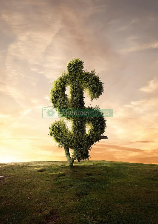 Aug. 2, 2013 - Topiary tree financial symbol Dollar sign (Credit Image: © Matt Walford/Cultura/ZUMAPRESS.com)