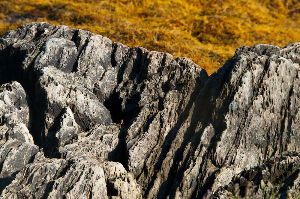 Jagged Cliffs and Seaweed, Holbrook Island Sanctuary, Brooksville, Maine, US