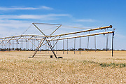 Mobile lateral move irrigation boom system in field of golden wheat before harvest near Woolpunda, South Australia, Australia. <br /> <br /> Editions:- Open Edition Print / Stock Image