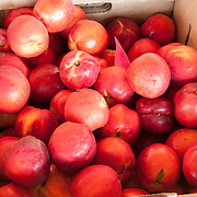 Boxes of fresh red plums at a farmstand in Concord, Massachusetts