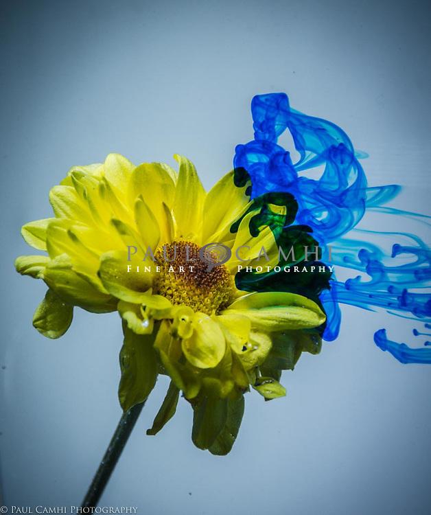 fine art photography, giclée print, Paul Camhi