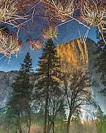 El Capitan reflected in the Merced River, Yosemite Valley, Yosemite National Park, California