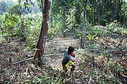 A man falls timber in the rainforest between Jambi and Tiga Puluh National Park, Sumatra, Indonesia, July 5, 2009.