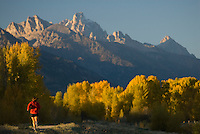 A young woman runs along a road beneath colorful fall foliage and the high peaks of the Tetons in Jackson Hole, Wyoming.