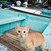 Cat at the fish market on the beach at Zihuatanejo, Mexico. The fish market on the beach at Playa Principal, Zihuatanejo, Mexico. When the local fisherman return about dawn, they sell their catches at a beach fish market to early morning buyers. Being a traditional fishing village, the seafood in Zihuatanejo is superb.