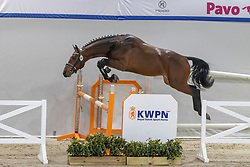 060, Norris S<br /> KWPN Hengstenkeuring 2021<br /> © Hippo Foto - Dirk Caremans<br />  02/02/2021