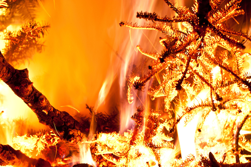 A Christmas tree burning at high heat in the middle of a large burn at Golden Gardens Park, Seattle, Washington.  This is an annual tradition with my friends.
