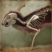 Section view of rabbit, the Horniman Museum, London http://www.vivecakohphotography.co.uk/2011/11/08/rabbit/