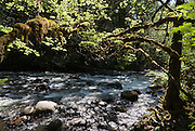 Wallace Falls State Park offers good hiking and camping beneath mossy trees on the rushing Wallace River near the town of Gold Bar, Washington, USA.