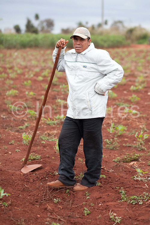 Middle aged Guarani man in a crop field. The Guarani are one of the most populous indigenous populations in Brazil, but with the least amount of land. They mostly live in the State of Mato Grosso do Sul and Mato Grosso. Their tradtional way of life and ancestral land is increasingly at risk from large scale agribusiness and agriculture. There have been recorded cases and allegations of violence between owners of large farms and the Guarani communities in this region.