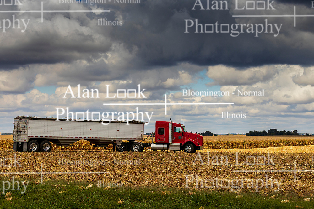 A semi truck or tractor trailer combination sits in a cornfield in central Illinois waiting to accept grain that has been picked or harvested by a large farm implement called a combine.