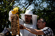 Beekeeper Ian Bailey with one of his students on a roof at Hackney City Far. Ian has several apiaries around East London. Keeping bees is a growing hobby in London and the hives and apiaries can be found in back gardens and roof tops across the capital.
