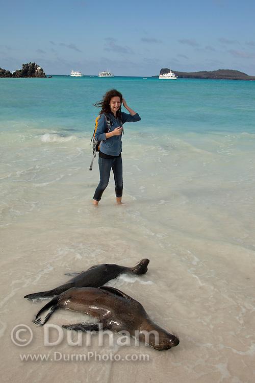 A young tourist nears Galapagos sea lions(Zalophus californianus) on the beach of Espanola Island, Galapagos Archipelago - Ecuador. (fully released - 82010EXsP)