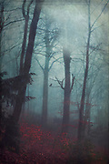 Forest on a misty and dark autumn morning - photograph edited with texture overlays