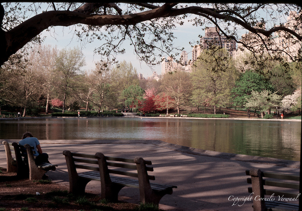 Spring blossoms at the Sailboat Pond in Central Park, New York City in 1980.