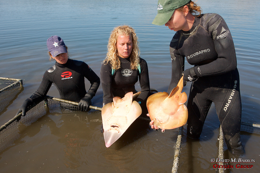Stephanie & Katie With Shovelnose Guitarfish & Thornback Ray