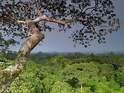 Kapok tree and Amazonian rain forest canopy, near Yasuni National Park on the Napo Wildlife Reserve, Ecuador. This massive track of land is protected by an ecoresort owned by the  Indians.
