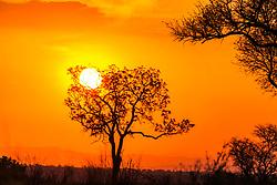 African Sunset, Kruger National Park.