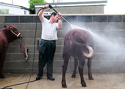 © Licensed to London News Pictures.14/07/15<br /> Harrogate, UK. <br /> <br /> A farmer washes his cattle down on the opening day of the Great Yorkshire Show.  <br /> <br /> England's premier agricultural show opened it's gates today for the start of three days of showcasing the best in British farming and the countryside.<br /> <br /> The event, which attracts over 130,000 visitors each year displays the cream of the country's livestock and offers numerous displays and events giving the chance for visitors to see many different countryside activities.<br /> <br /> Photo credit : Ian Forsyth/LNP