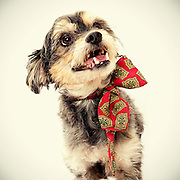 Great dog photos helping shelter dogs find homes faster.