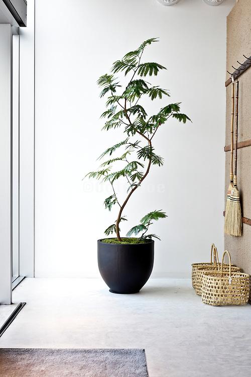 plant at entrance