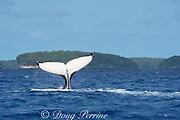 humpback whale, Megaptera novaeangliae, tail slap, Vava'u, Kingdom of Tonga, South Pacific