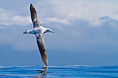 05 New Zealand Bird Photography