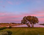 Tree, Mecox Bay, Water Mill, NY