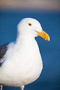 White Seagull Stitting On The Pier