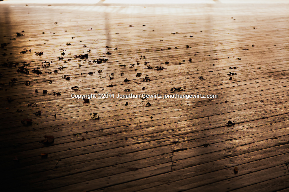 Dry leaves are scattered by the wind on an outdoor wooden plank floor. WATERMARKS WILL NOT APPEAR ON PRINTS OR LICENSED IMAGES.