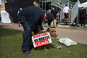 Protester and his demo dog gather at College Green in Westminster outside the Houses of Parliamant following a Leave vote, also known as Brexit as the EU Referendum in the UK votes to leave the European Union on June 24th 2016 in London, United Kingdom. Membership of the European Union has been a topic of debate in the UK since the country joined the EEC, or Common Market in 1973. It will be the second time the British electorate has been asked to vote on the issue of Britains membership: the first referendum being held in 1975, when continued membership was approved by 67% of voters. The two sides are the  Leave Campaign, commonly referred to as a Brexit, and those of the Remain Campaign who are also known as the In Campaign.