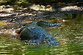 Wildlife - Reptiles & Amphibians