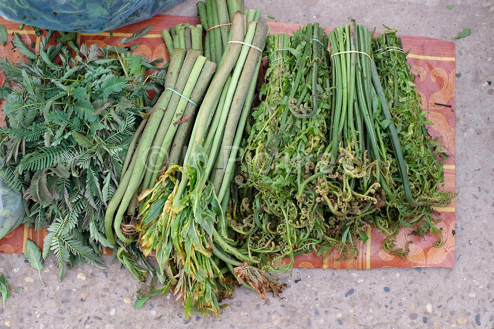 Pak Koud / ferns from the forest and river for sale at Khua Din morning market in Vientiane city, Lao PDR. A large variety of local products are available for sale in fresh markets all over Laos, all being sold on small individual stalls. Talat Khua Din is a traditional Lao market close to Vientiane city centre and is currently under threat from the construction of a shopping mall.