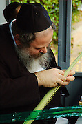 For any of the 4 species to be used for the religious ritual they must be up to speck. A rabbi is examining the lulav to verify its quality