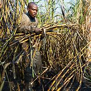MALAWI (Concern Universal) – Building Capacity in Sugar