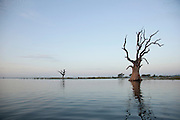 Trees grown from the water in the Irrawaddy River, near Mandalay, Myanmar