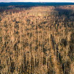 Drone view of a forest near Catherine Swamp in Hazelhurst, Pennsylvania.