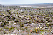 the natural vegetation of the plain desert in the foreground Bodega Del Fin Del Mundo - The End of the World - Neuquen, Patagonia, Argentina, South America