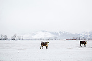 Lockhart Cattle Company.<br /> Photo by David Stubbs