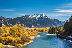 Autumn in Swan Valley Idaho.  The South Fork of the Snake River flanked by golden cottonwoods on the left, conifers on the right and a snow capped Mount Baldy towering above